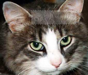 标题:多多留意猫猫的耳朵