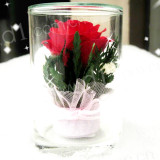 七夕情人节礼品:泰国进口--永恒的爱(不凋谢的真玫瑰花!