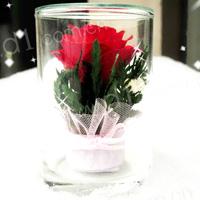 七夕情人节礼品:泰国进口--永恒的爱(不凋谢的真玫瑰花!可保持5年以